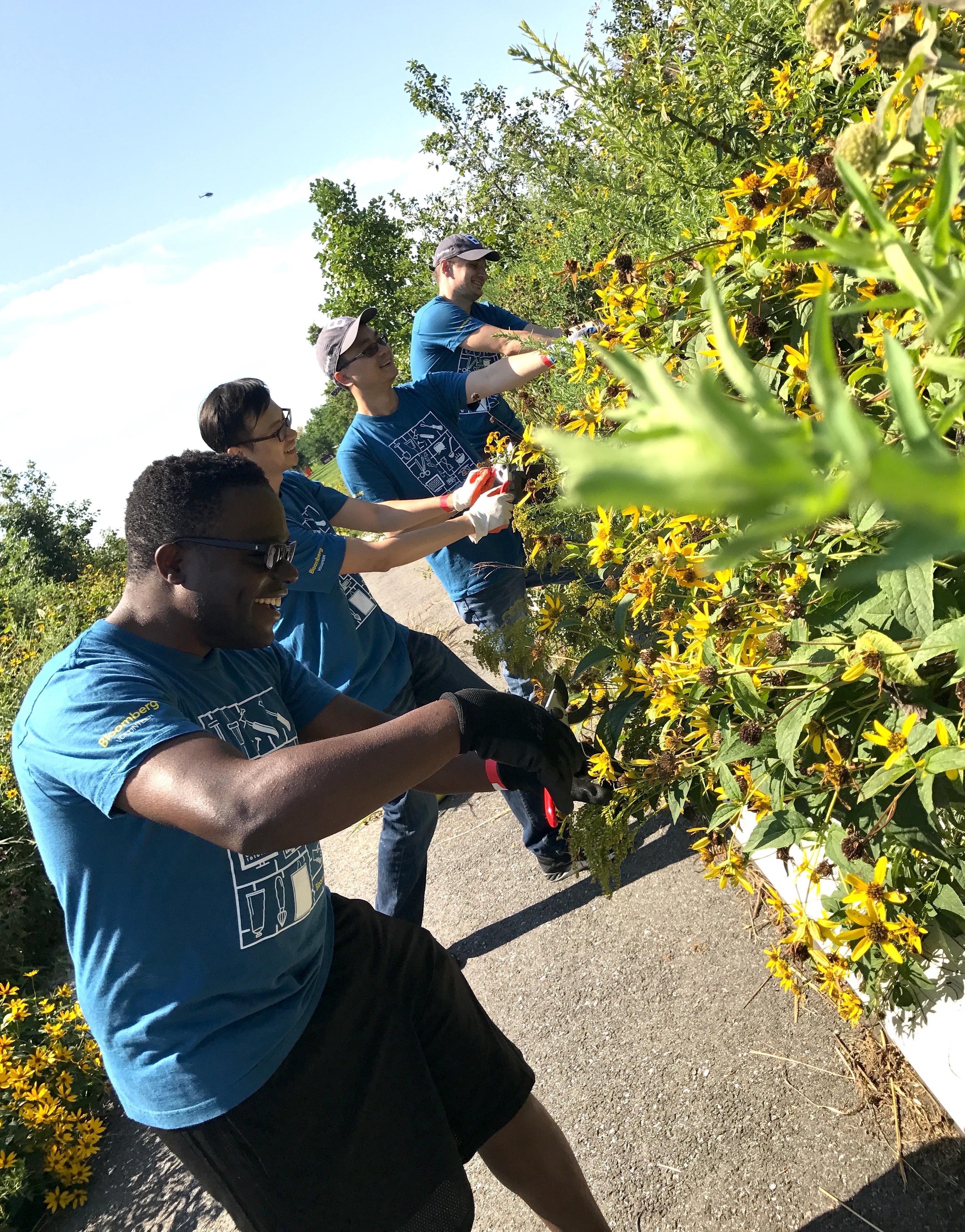 Bloomberg Volunteers Cutting Flowers